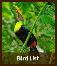 Bird Check List