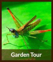 Thumbnails_garden_tour