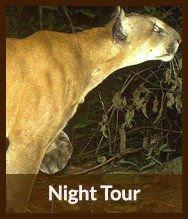 Thumbnails_night_tour