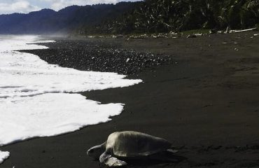 TURTLES_COSTA_RICA