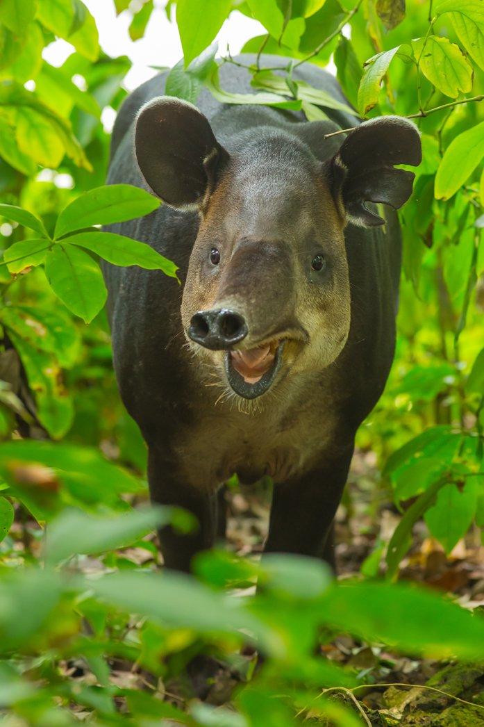 Wildlife_Costa_Rica